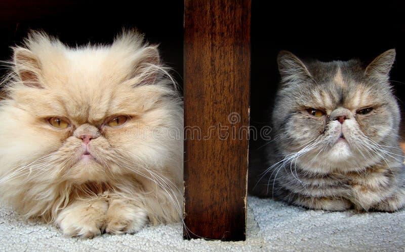 gatos foto de archivo