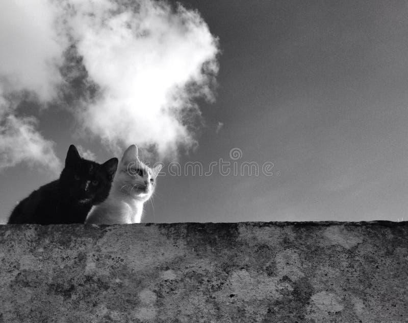 gatos imagem de stock royalty free