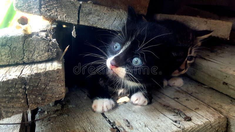 gatos imagem de stock