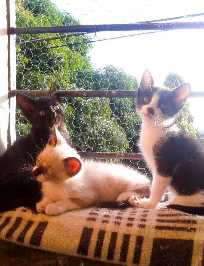 gatos foto de stock