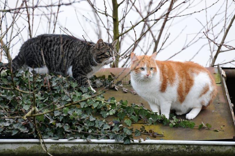 Gatos assustado foto de stock