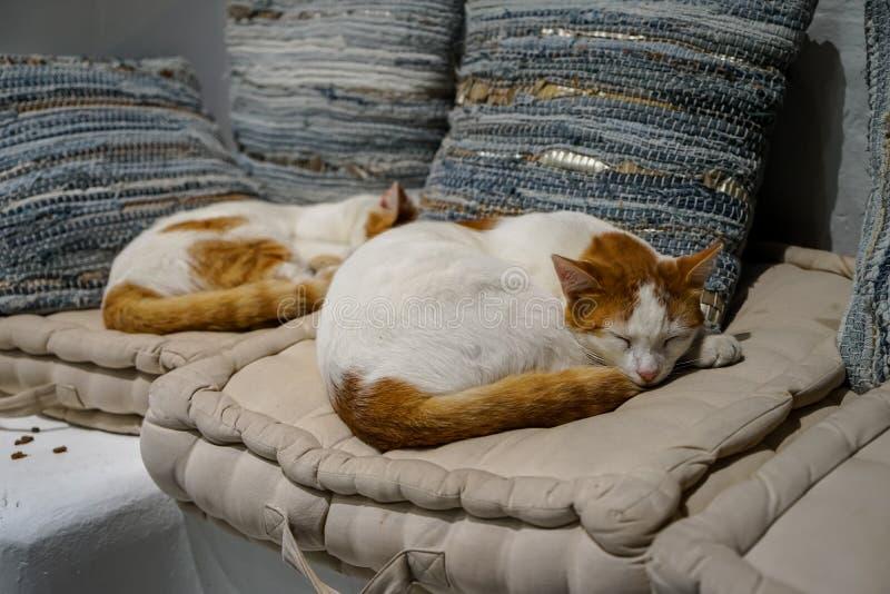Gatos blancos y marrones hermosos del color que duermen comfortablemente en el amortiguador cómodo de la tela blanca con el fondo fotografía de archivo