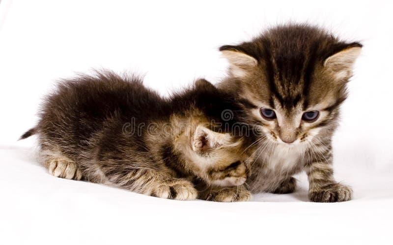 Gatos bonitos fotos de stock