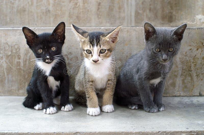 Gatos da vaquinha imagem de stock royalty free