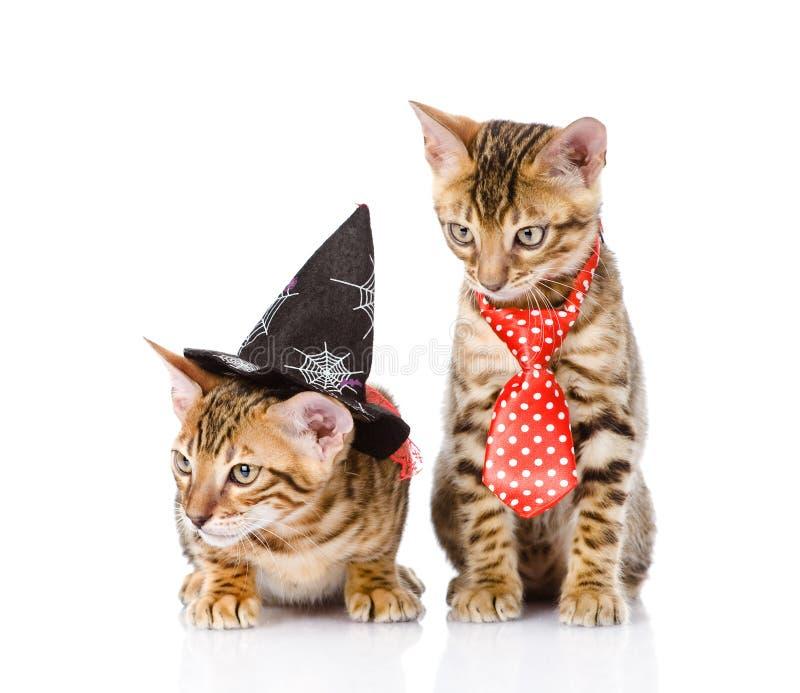 Gatos de Bengal com chapéu da bruxa No fundo branco fotos de stock