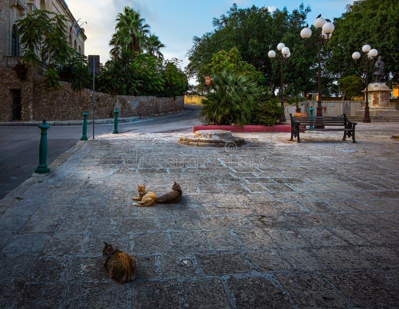 Gatos de la ciudad de La Valeta malta foto de archivo