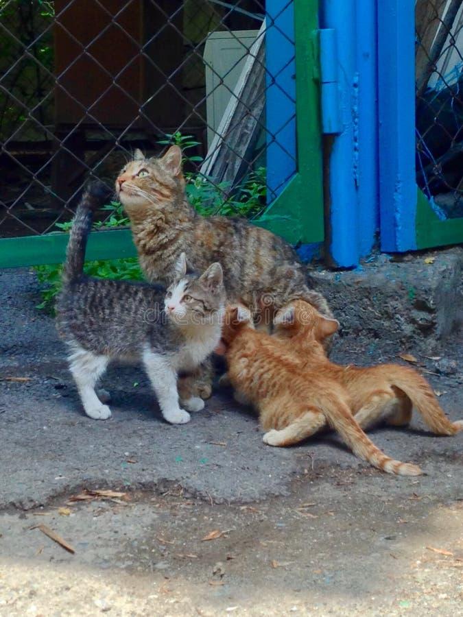 Gatos de la mamá y gatos del cutie imágenes de archivo libres de regalías
