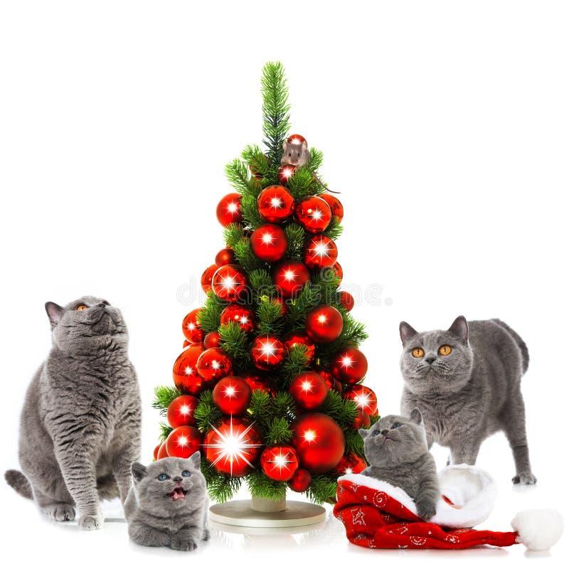 Gatos de la Navidad fotografía de archivo