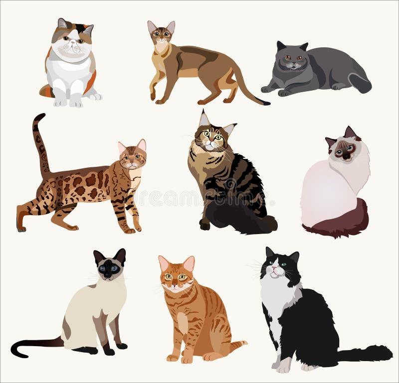 Gatos de la raza del vector en diversas actitudes Animales domésticos altamente detallados de la historieta libre illustration