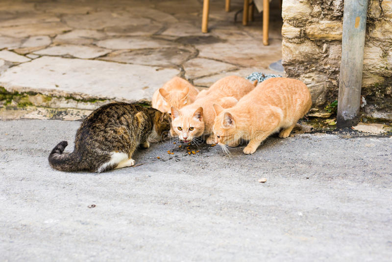 Gatos desabrigados que comem em uma comida de gato da rua imagem de stock royalty free