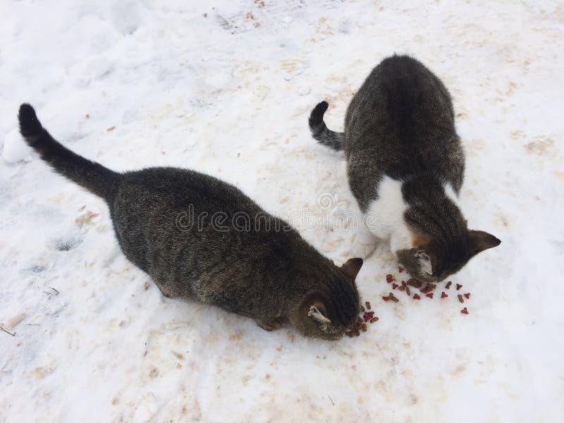 Gatos dispersos foto de stock royalty free
