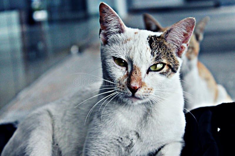 Gatos dispersos imagens de stock