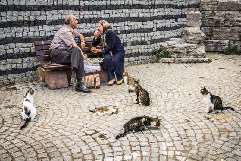 Gatos dispersos em Istambul, Turquia fotografia de stock royalty free