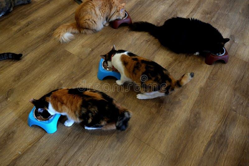 Gatos do café - tempo de alimentação 1 imagens de stock royalty free