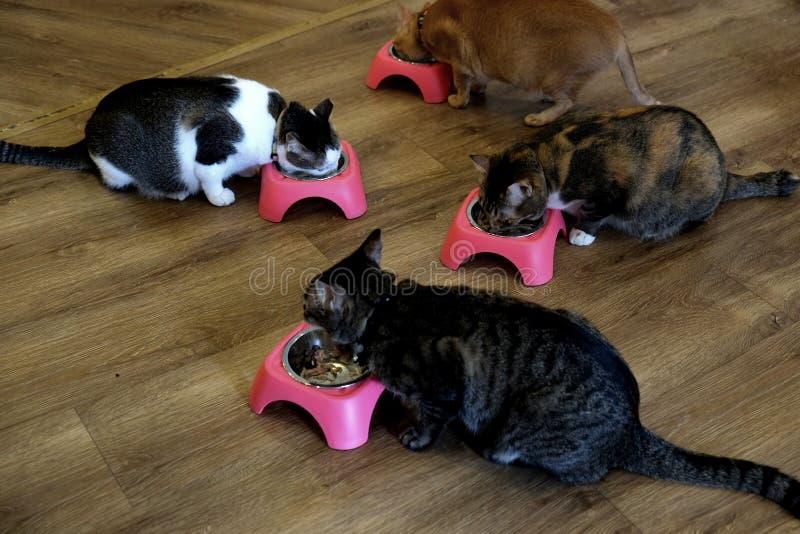 Gatos do café - tempo de alimentação 2 imagens de stock royalty free