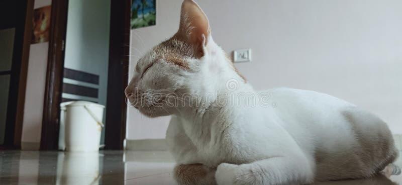 Gatos dulces soñolientos imagenes de archivo
