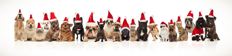 Gatos e cães do Natal que vestem os tampões de Santa que estão e que sentam-se foto de stock