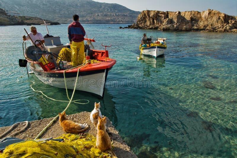 Gatos e fshermen no cais de Lefkos, ilha de Karpathos imagem de stock