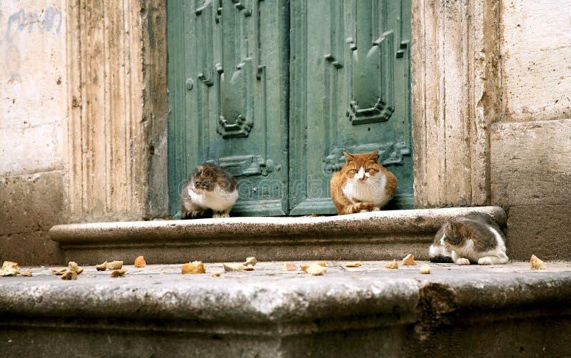 Gatos em Dubrovnik fotografia de stock royalty free