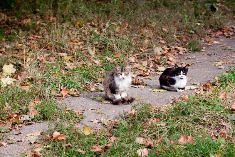 Gatos en el camino fotografía de archivo