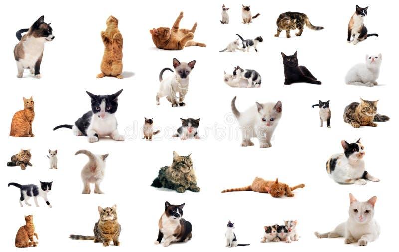 Gatos en estudio foto de archivo libre de regalías