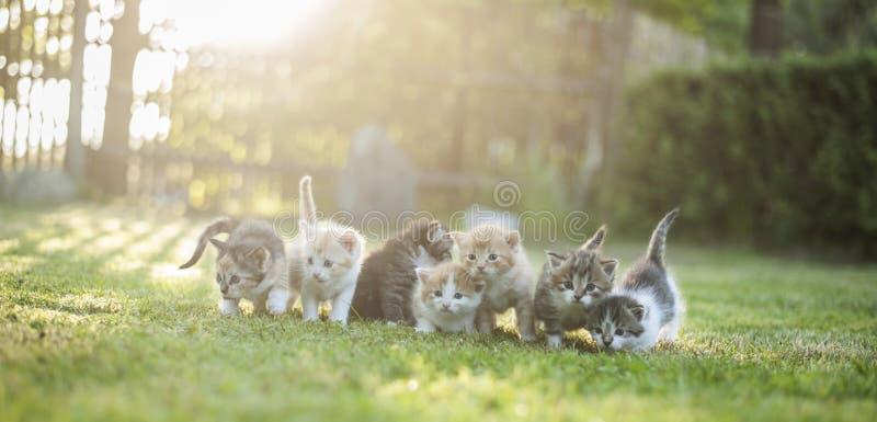 Gatos fora imagem de stock