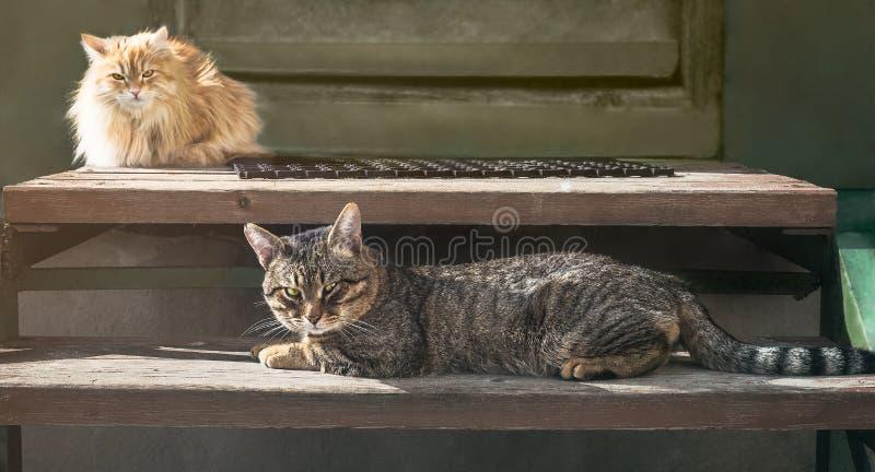 Gatos irritados fotografia de stock