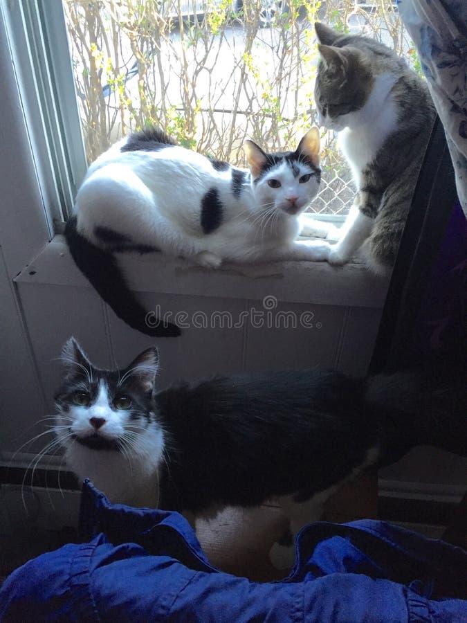 Gatos na janela fotografia de stock