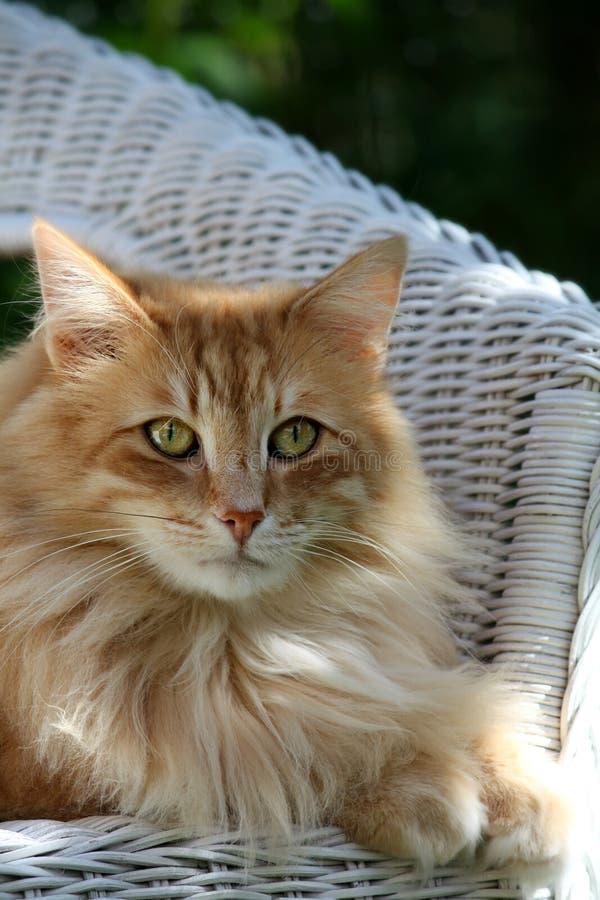 Gatos na luz solar fotos de stock royalty free