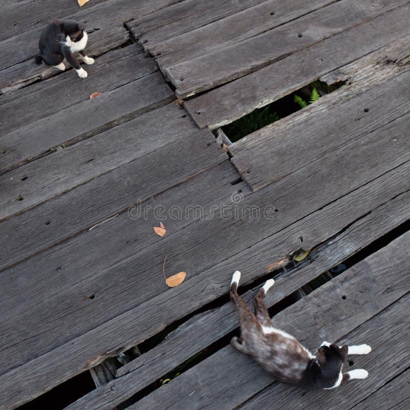 Gatos na madeira fotografia de stock royalty free