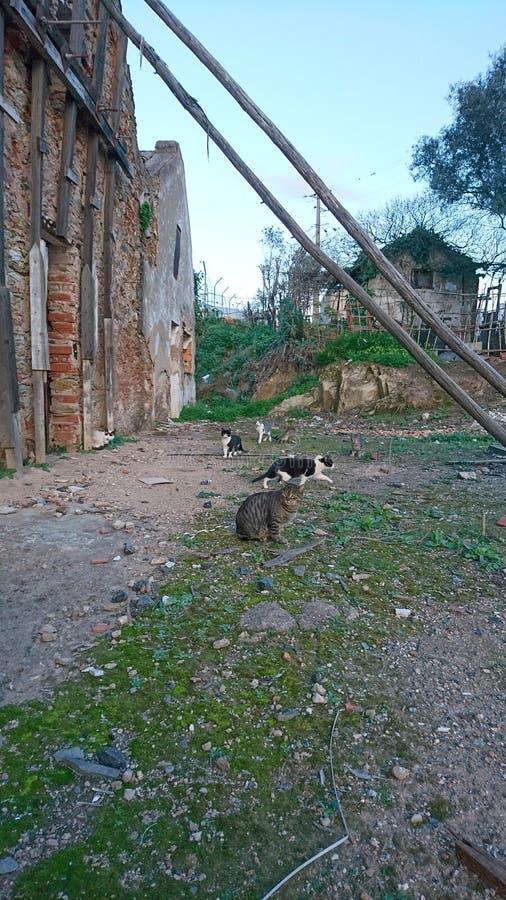 Gatos nas ruínas imagem de stock
