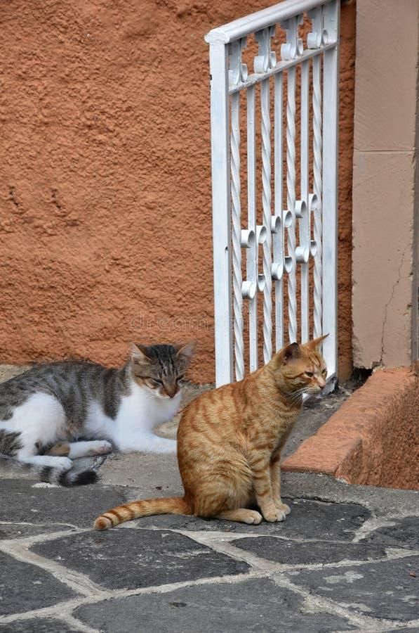 Gatos nas ruas de Tropea, Itália imagem de stock
