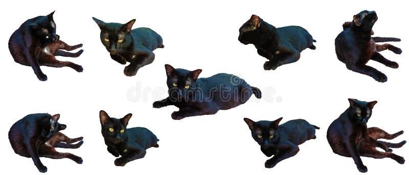 Gatos negros fotografía de archivo libre de regalías