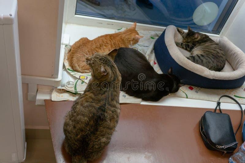 Gatos no caf? do gato fotos de stock