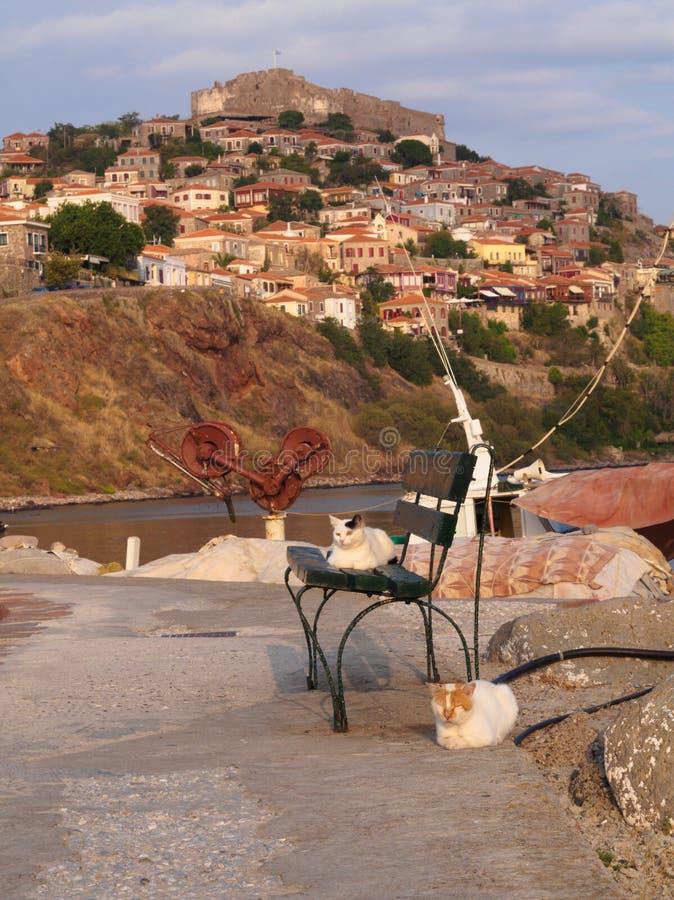 Gatos no porto de Molyvos, Lesbos, Grécia imagem de stock