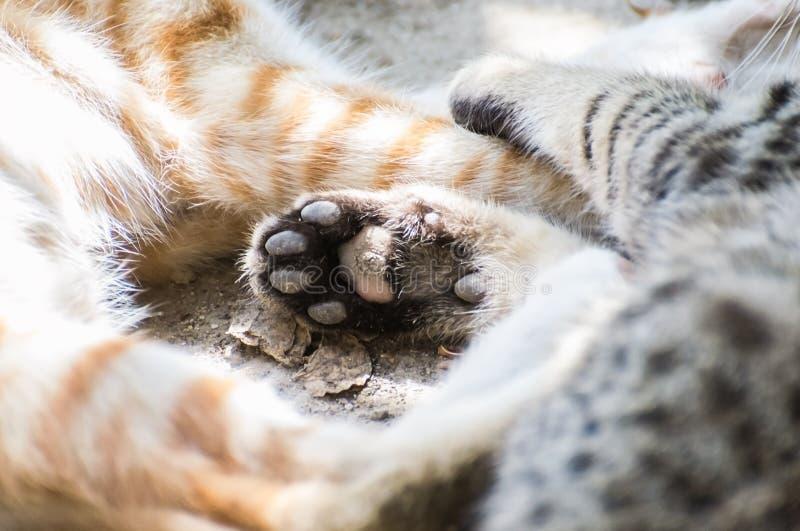 Gatos Paw Claw foto de archivo