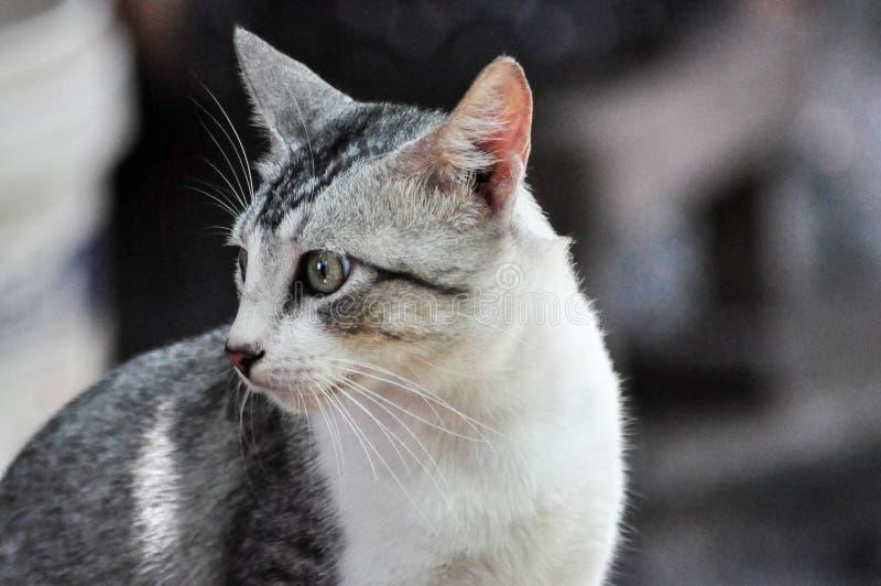 Gatos perdidos foto de archivo libre de regalías