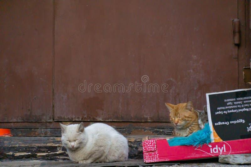 Gatos perdidos lindos que duermen en una caja en la calle fotografía de archivo