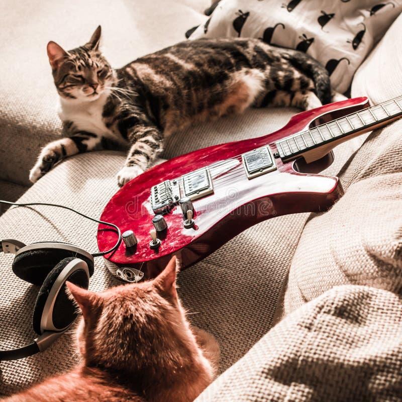 Gatos perezosos con una guitarra eléctrica imagen de archivo libre de regalías
