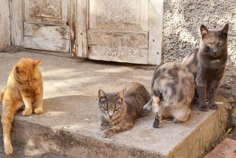 Gatos perto da casa imagens de stock