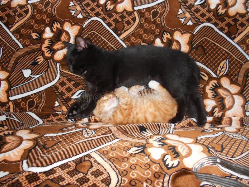 Gatos pretos e vermelhos imagens de stock royalty free