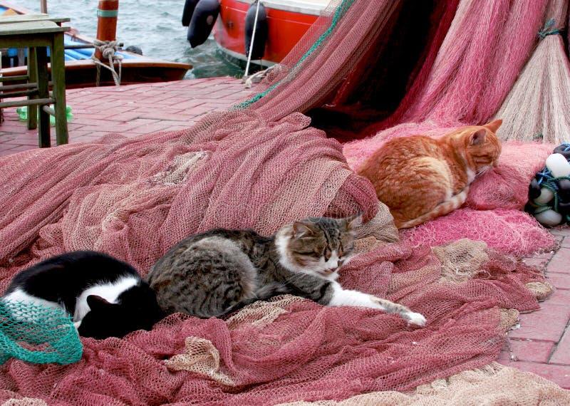 Gatos que duermen en las redes de pesca fotografía de archivo libre de regalías