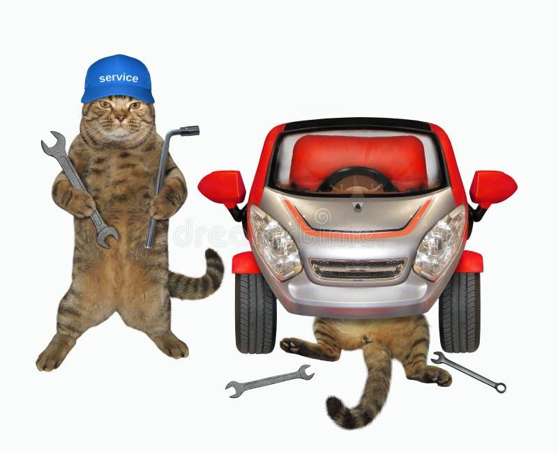 Gatos que fijan el coche rojo fotografía de archivo