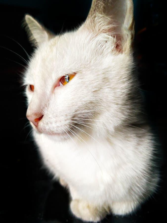 Gatos que se expresan fotos de archivo libres de regalías