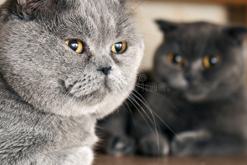 Gatos que se sientan debajo de una cama en período de acoplamiento imagen de archivo libre de regalías