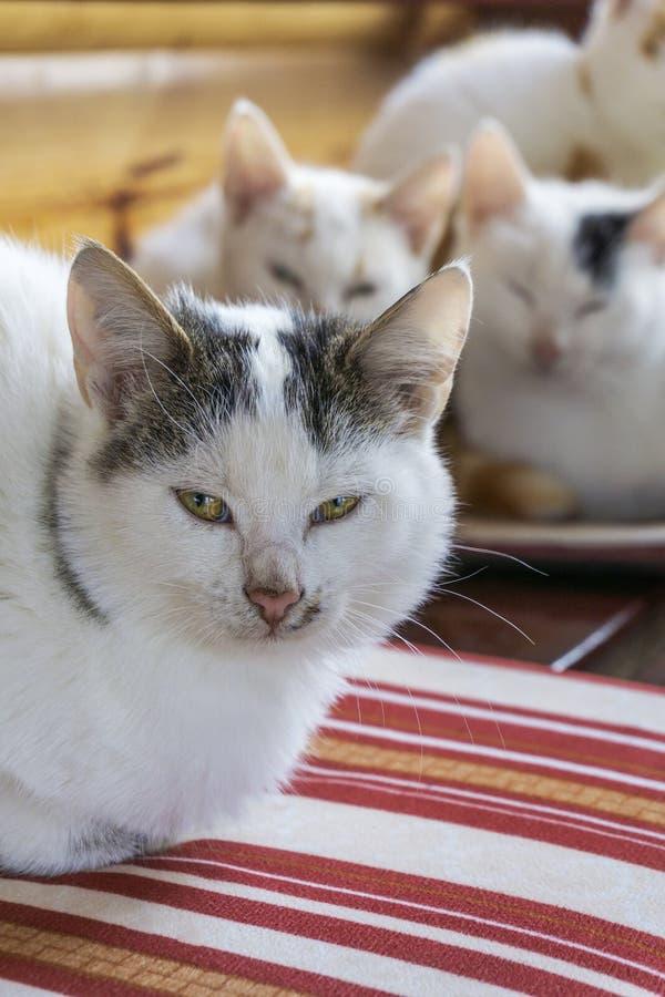 Gatos que snuggling junto foto de stock royalty free