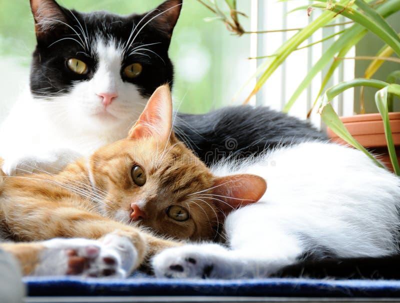 Gatos que snuggling junto