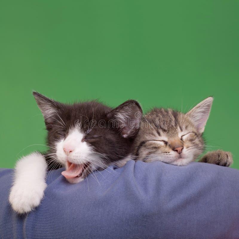 Gatos soñadores fotografía de archivo libre de regalías