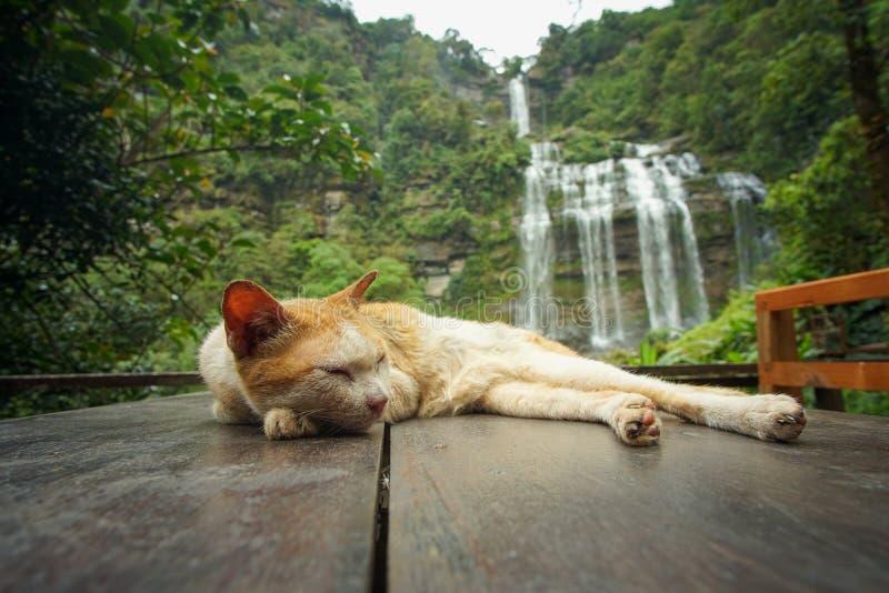 Gatos y cascadas en Laos foto de archivo