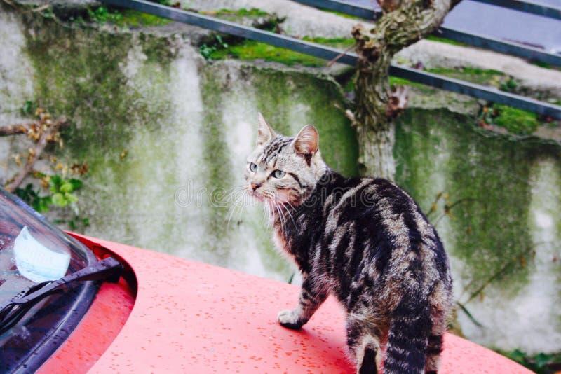 gatti immagine stock libera da diritti